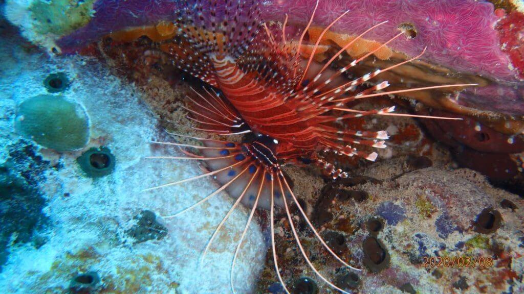 duiken lombok
